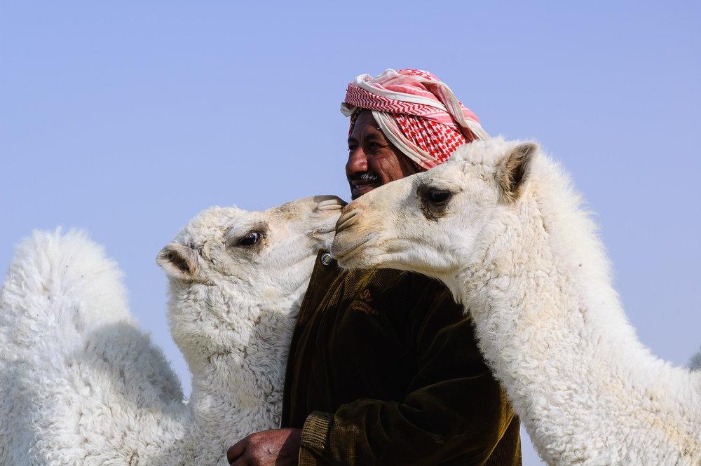 Shepherd and Camels.jpg