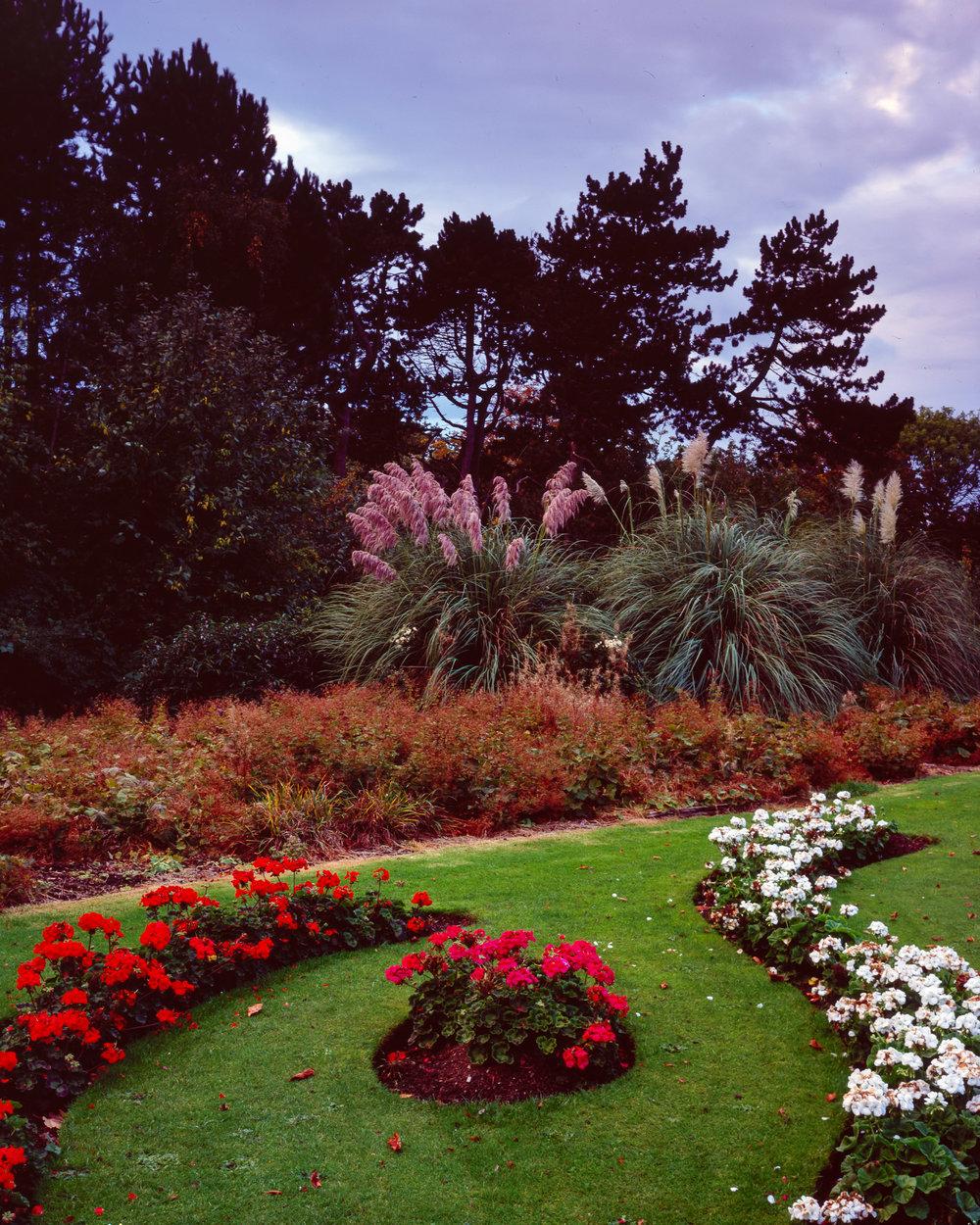Albert Park Flowers