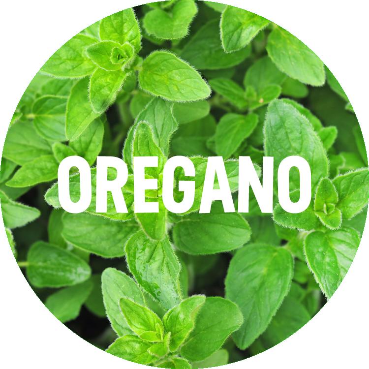 ingredient backgrounds_oregano.png