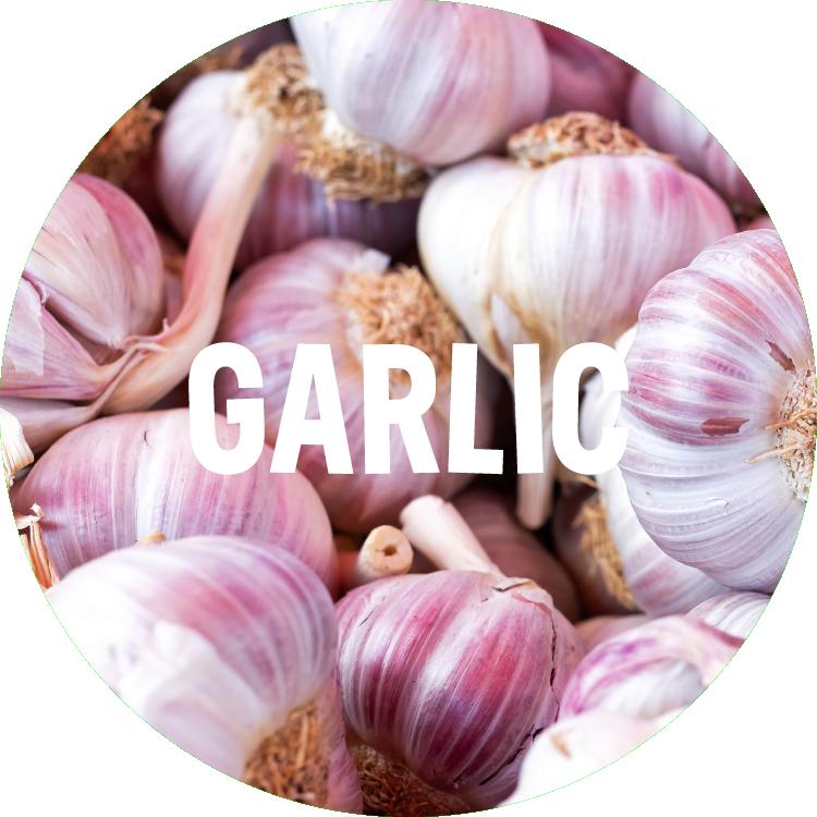ingredient backgrounds_garlic.png