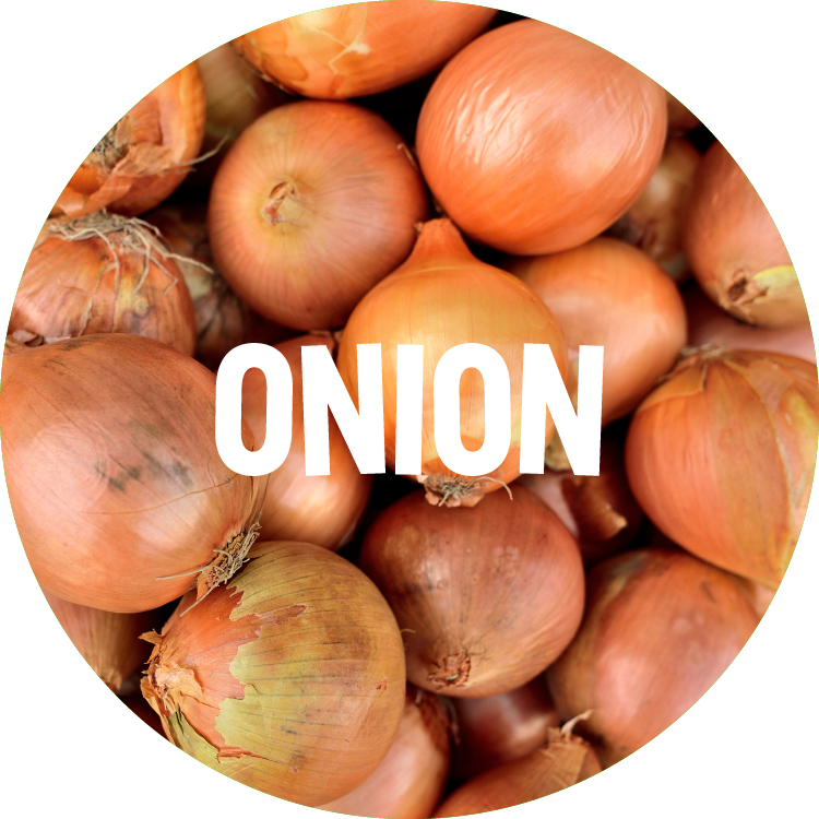 ingredient backgrounds_onion.png