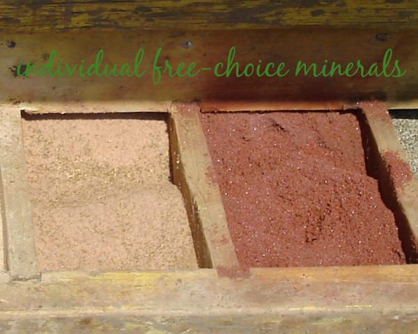 minerals 006a_640x480.jpg