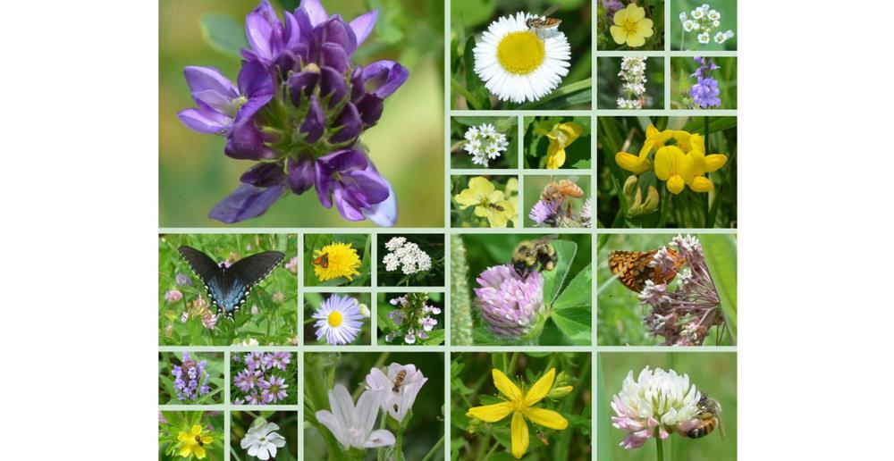 summer flowers 1280x660.jpg