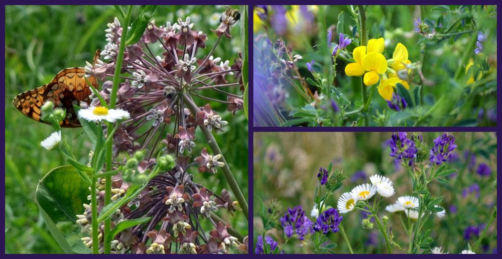 flower pairs 1280x660.jpg