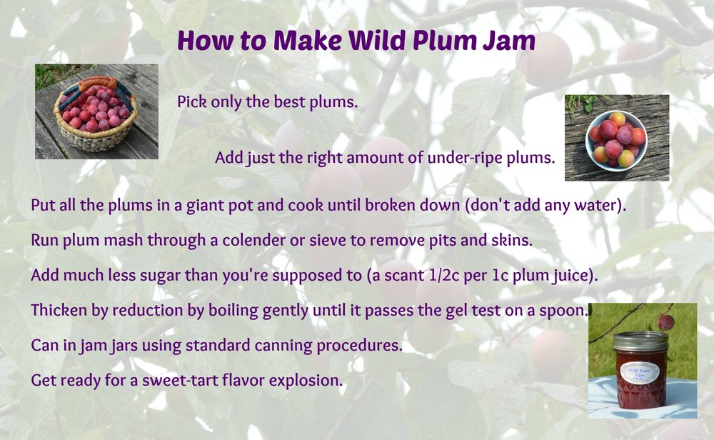 Sheri's wild plum jam.  jam for exciting people.