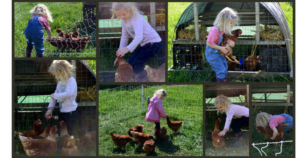Bri and chickens 1280x660.jpg