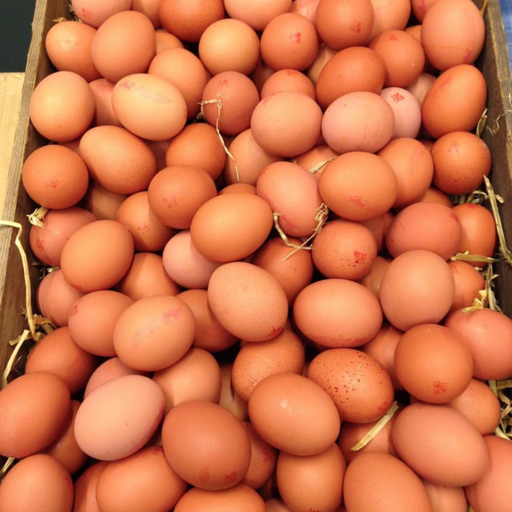 Matfen Northumberland Free Range Eggs