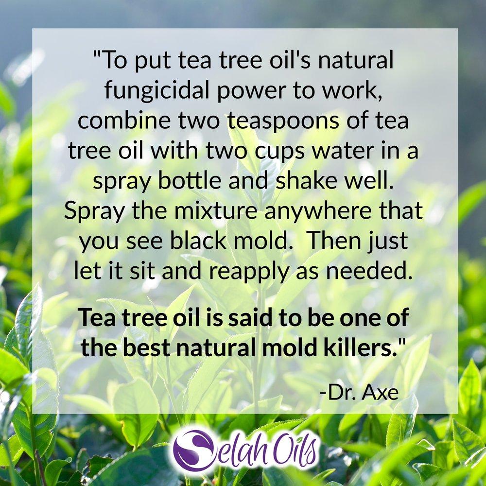 Tea Tree Mold Killer.jpg