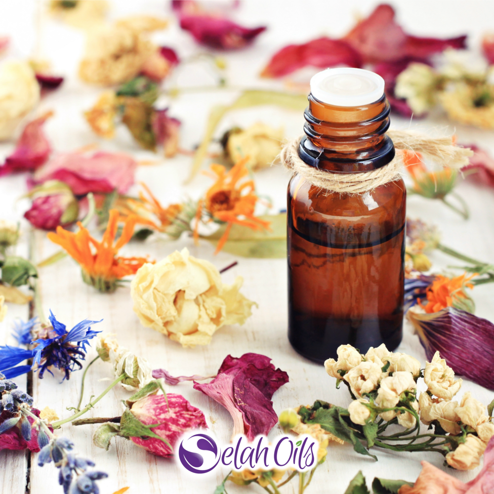 Shop Oils - Click Here to Shop