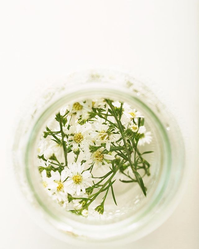 "Something to note as flu season approaches... ""The internal application of German chamomile [essential oil] during the acute stages of flu is useful because it detoxifies metabolic wastes from pathogenic microorganisms. . One or two drops will deliver the full pharmacological effect that can be gained from any given oil."" -Kurt Schnaubelt, Ph. D., Medical Aromatherapy, p. 223, 233"