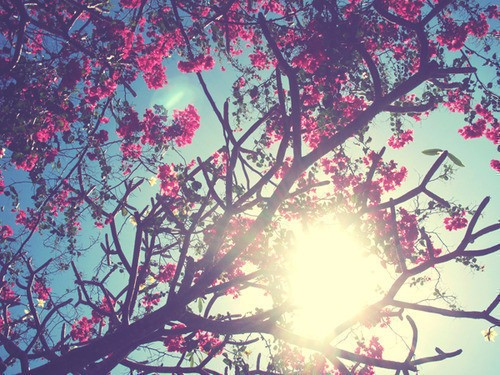pretty.jpg