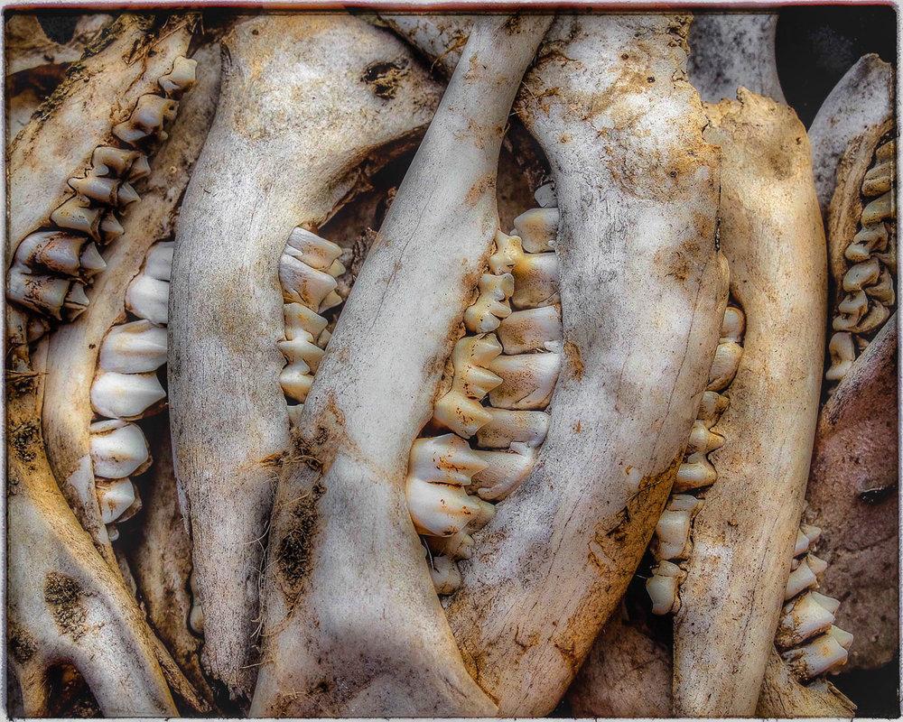 The Bone Collector  is an award winning still life photograph.