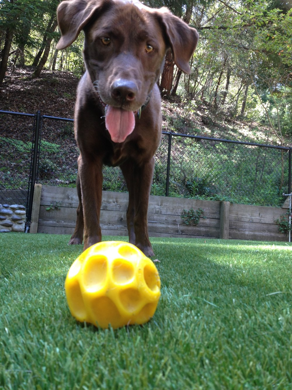 Hutch with yellow ball.jpg
