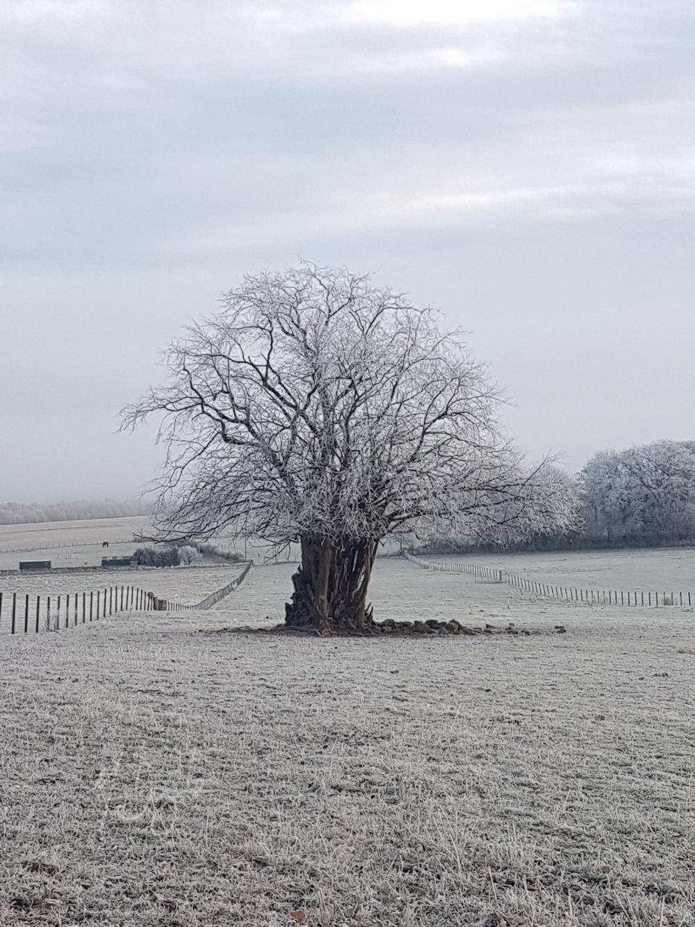 Frost tree