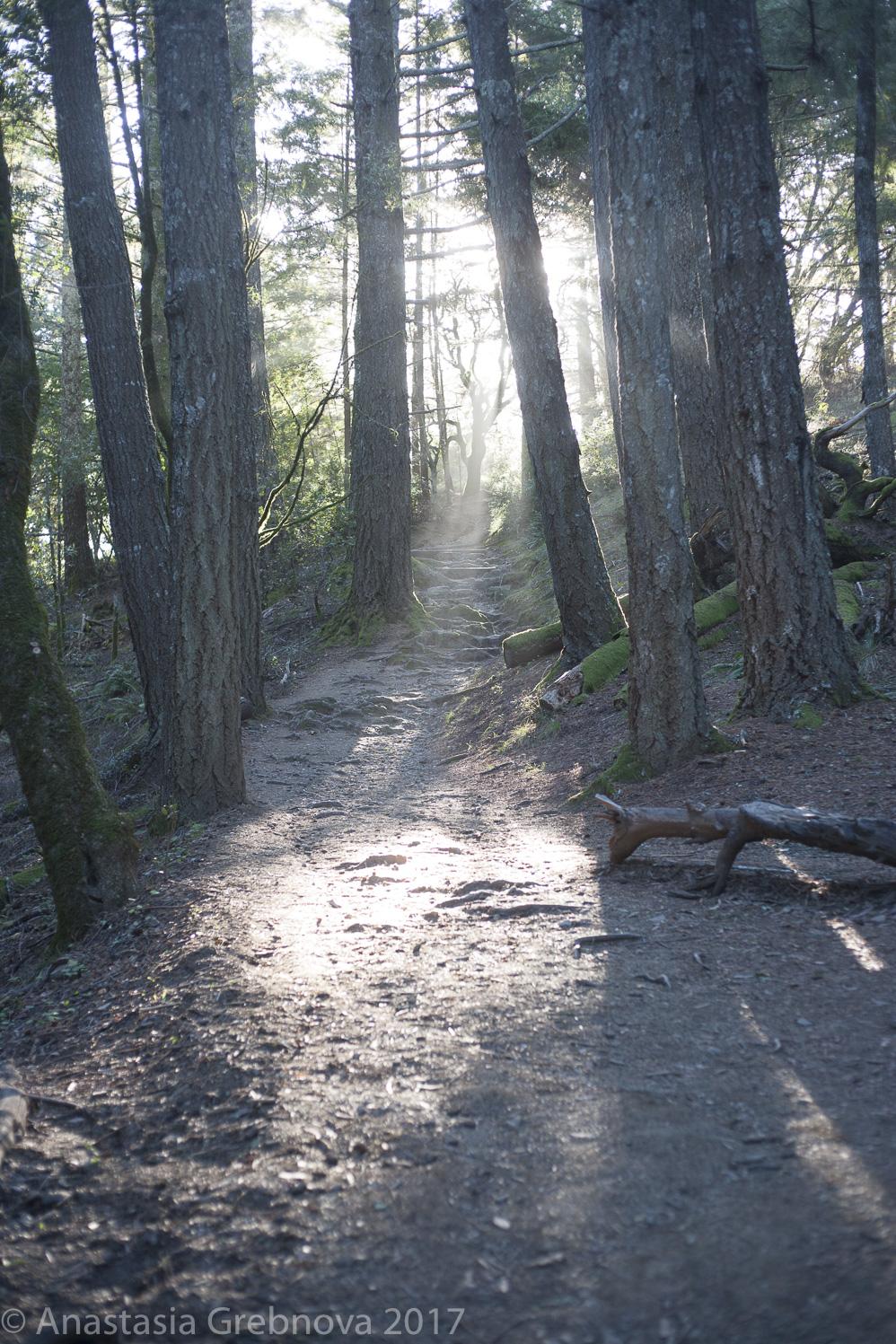 thumbnail-Muir Woods.jpg