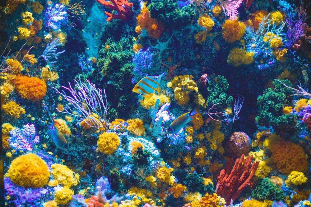 corals reef