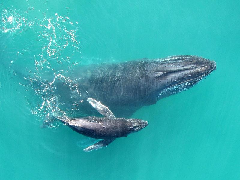 whispering-whales-1-737094c2b8f1aaac28bc47183219c85f80bea1a7-s800-c85.jpg