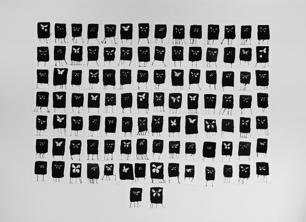 """One Hundred Butterflies    A series of 100 platinum palladium butterfly prints, approximately 5x8 inches each, created by placing found dead butterflies in direct contact with the paper. Each sheet of paper is hand coated with a light sensitive platinum palladium solution and exposed by the artist. The total size of the final installation is approximately 85x75inches.   The Tao Te Ching wisely advices, """"Stop thinking and end all your problems. . ."""" This journey—or inner migration—leads one to that ultimate space of mindfulness.  A journey so beautiful is exemplified in the migration of butterflies—living beings that are willing to risk the known for the unknown.  A path fraught with known threats yet enveloped in deep meditation on the next flutter, the next footstep, the next breath—all migration—an expression of hope.  Defiant of the terror of oppression, each movement of the butterfly is a validation of life."""