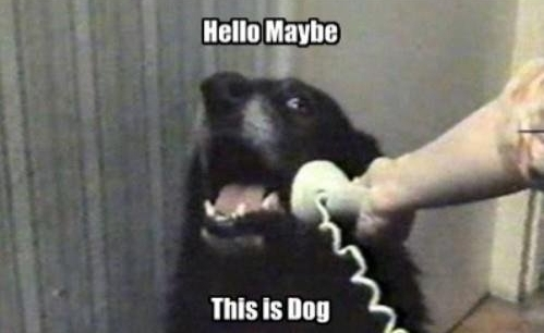 callmemaybe-dog.jpg