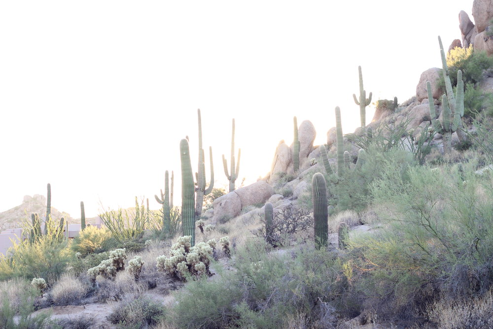 HWD Travels - Scottsdale