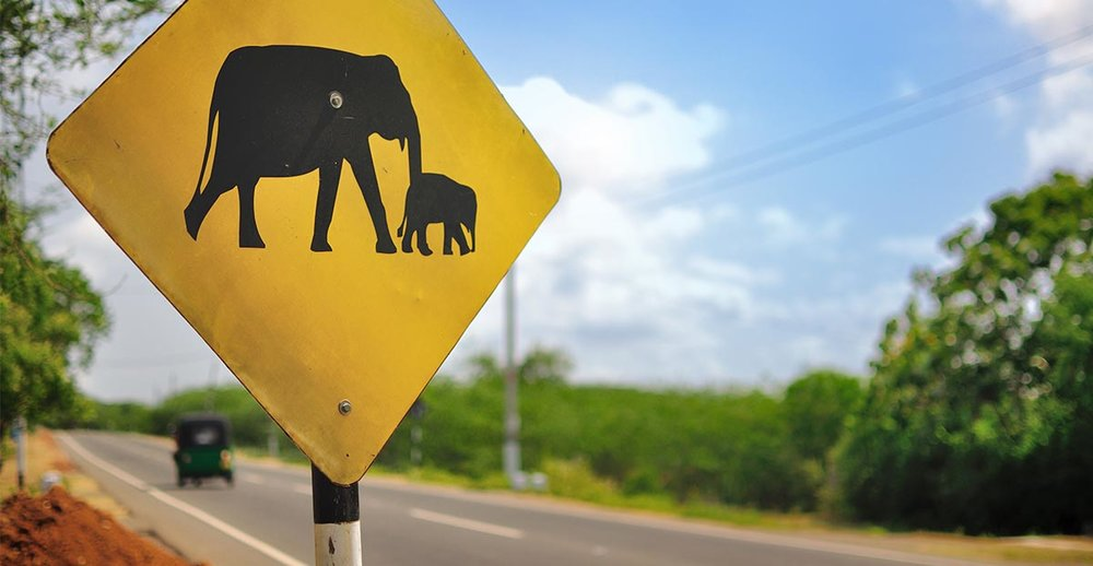 Elephant Sign Sri Lanka Coastal.jpg