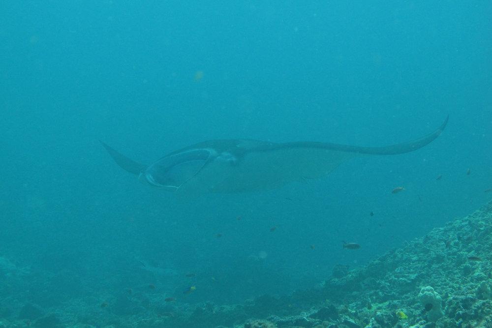 Dive Komodo -