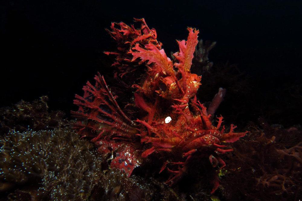 Alor Diving -