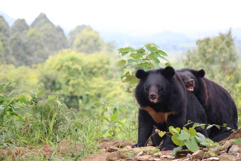 Free the Bears.jpg