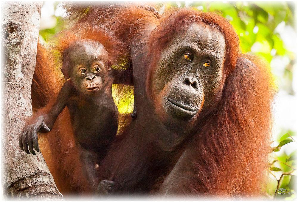 South Kalimantan -