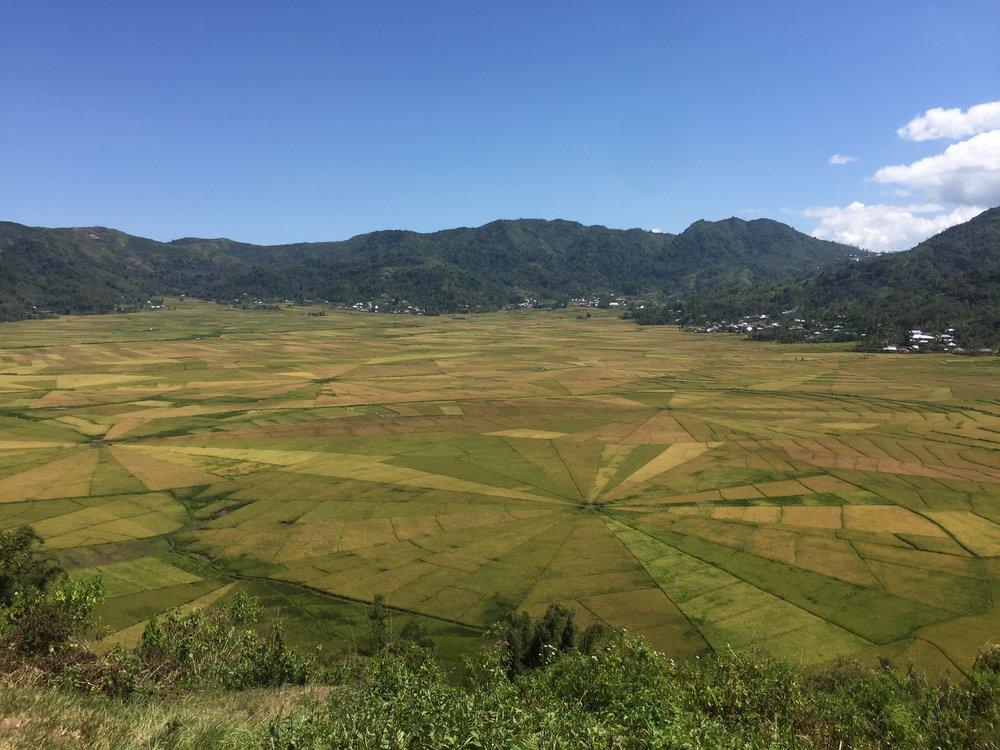 cancar rice field.jpg