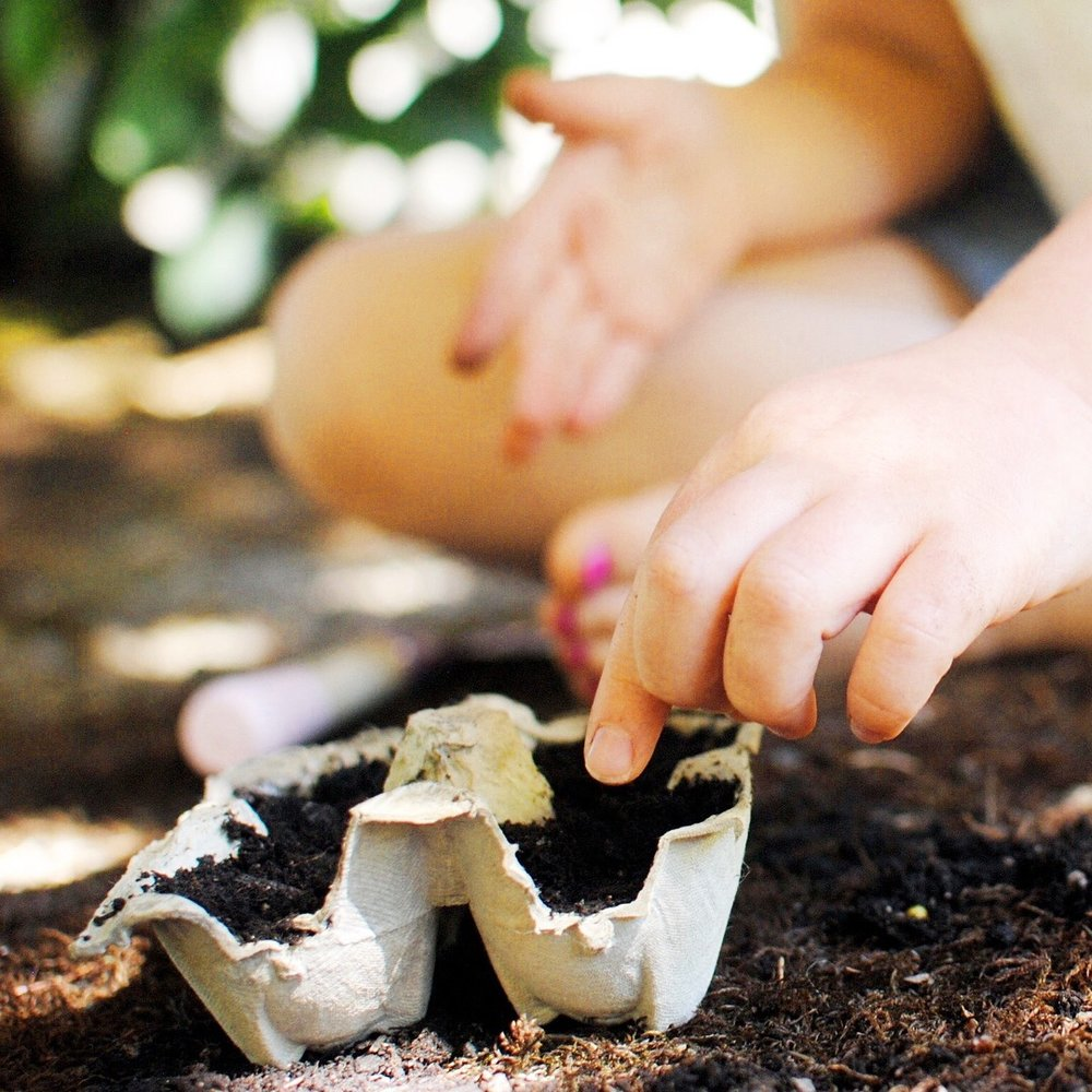 Windowsill Garden - This one is easy!Just plant, water, and watch your seeds sprout. Keep your egg carton in a sunny indoor location away from any pets or babies who may try to play with it.
