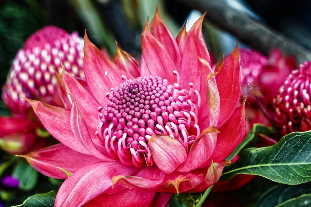 WILD HARVESTED AUSTRALIAN - Bush Botanicals
