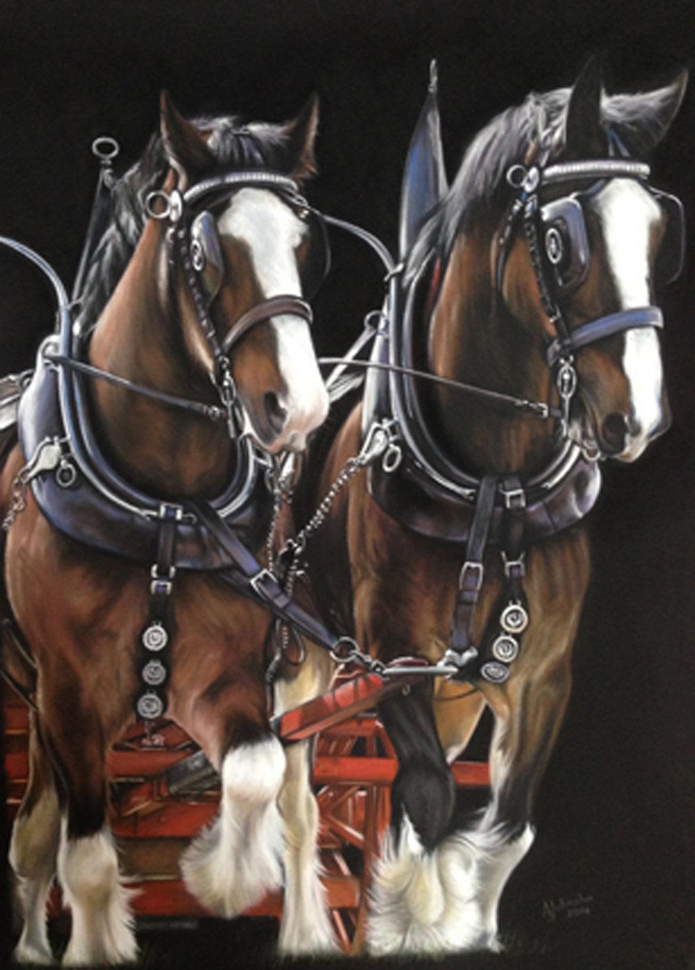 Shire horses - WIlliam and Robbie
