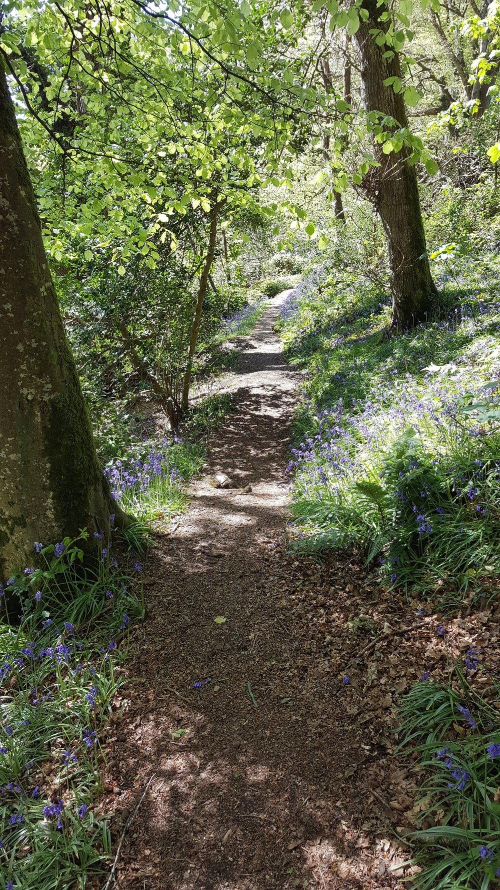 Carwinion Woodland walk