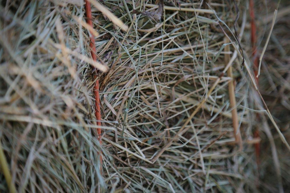 Close hay string.jpg