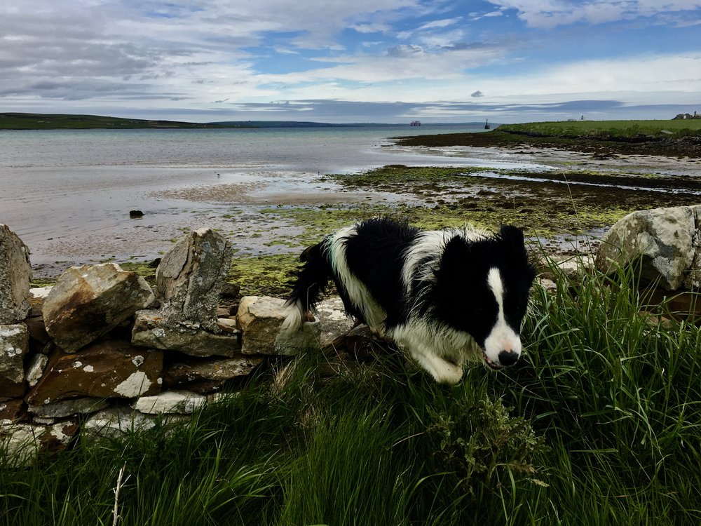 Jack - Swanbister Bay, Orkney