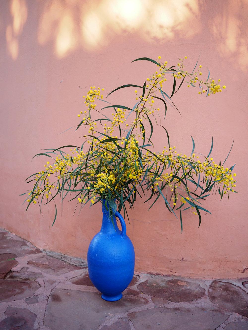 Beautiful Mimosa flowers