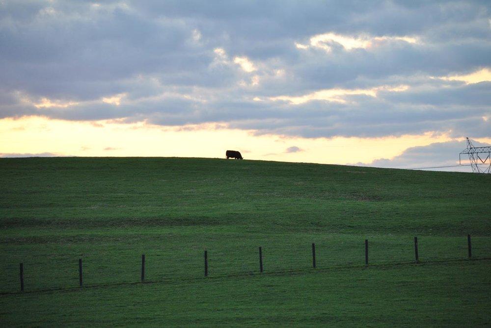 hb-farms-5.jpg