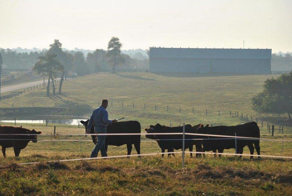 hb-farms-14.jpg