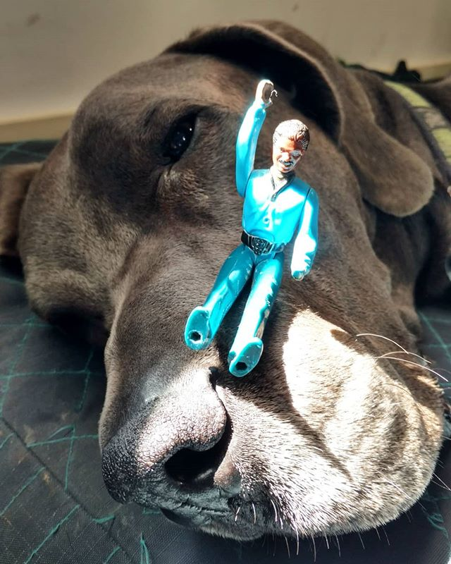 Lando befriends Nero, the sleeping giant! He approves of this adventure!  @vtwinemerchants #art #adventuresoflando #starwars #stevesharonart #btv #vt #landocalrissian #nero