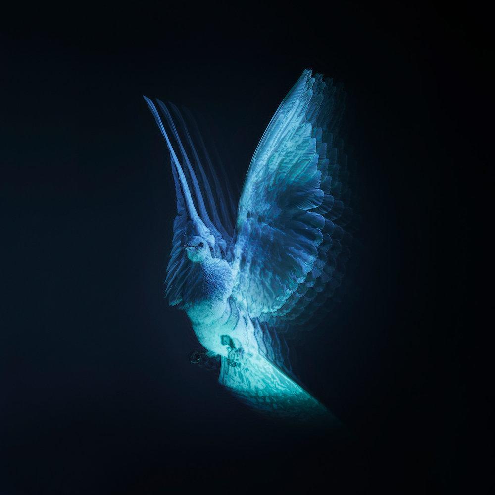 Hologram_Joe.jpg