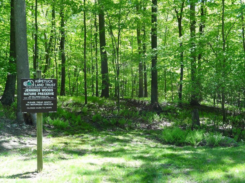 jennings woods.jpg