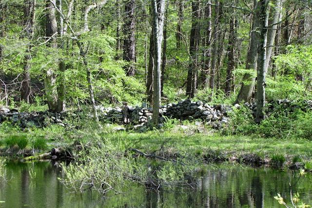 pond view preserve easton photo vanessa mickan.jpg