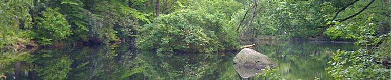 Morton Pond.jpg