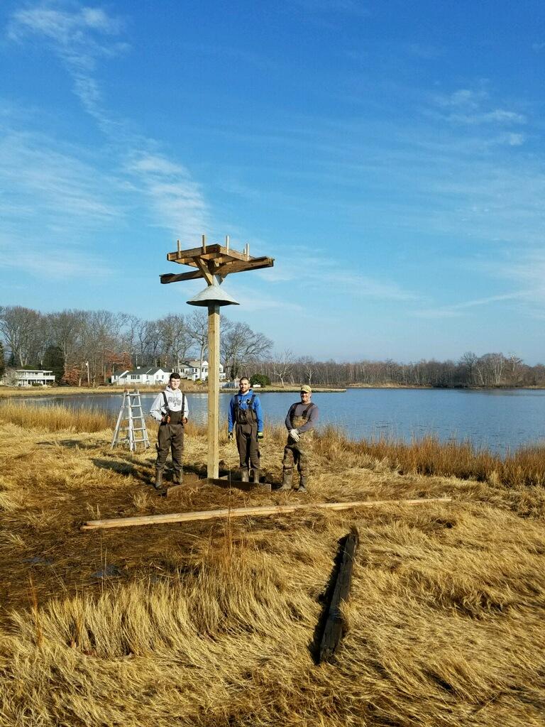 Osprey Platform - Installation Allen Salt Marsh.JPG