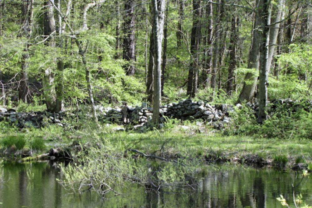 Pond View Preserve