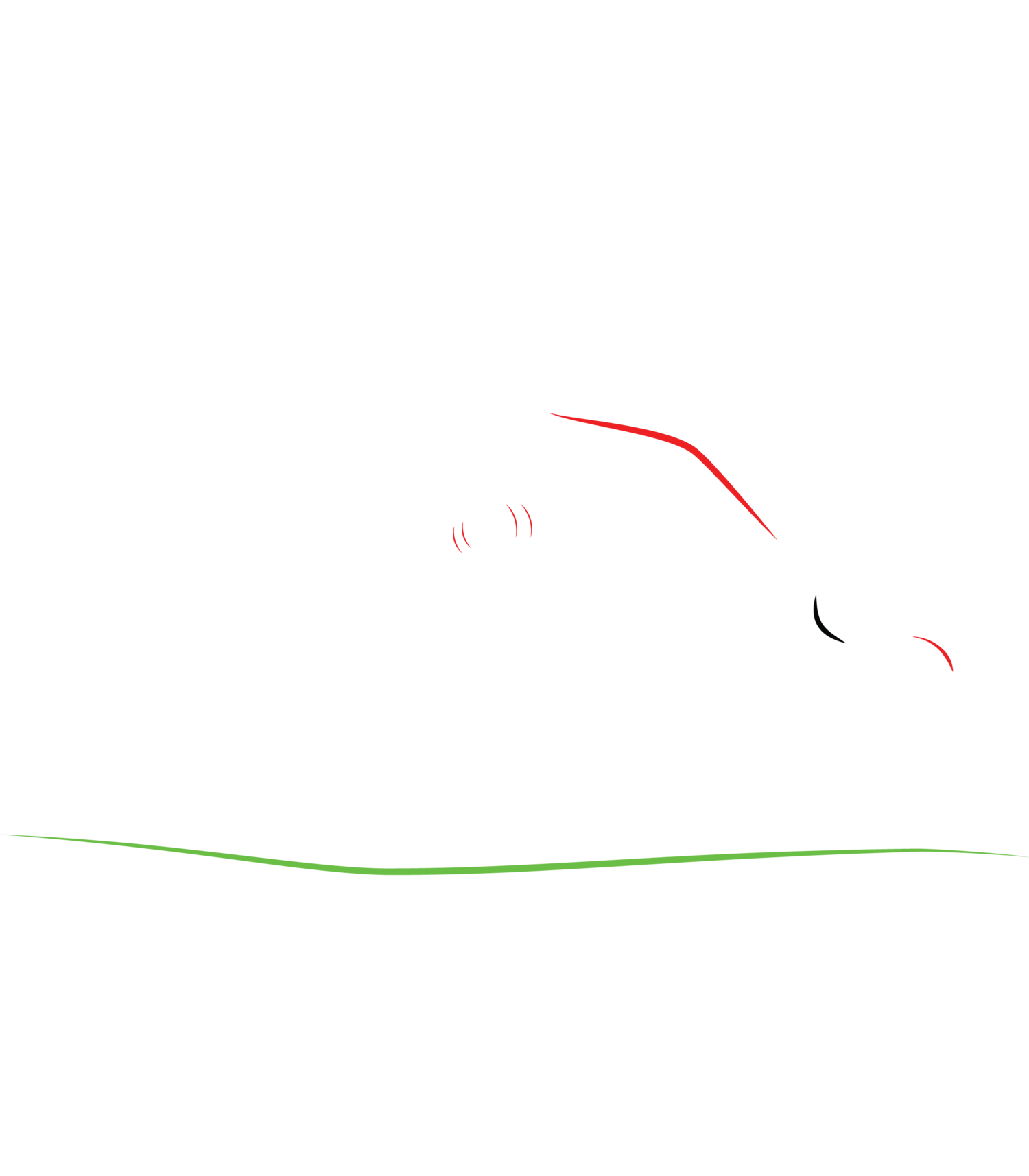 Wag & Walk Dog Walking