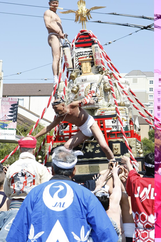 Cherry_Blossom_2008_0149.JPG