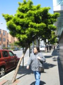 cbd_tree.jpg