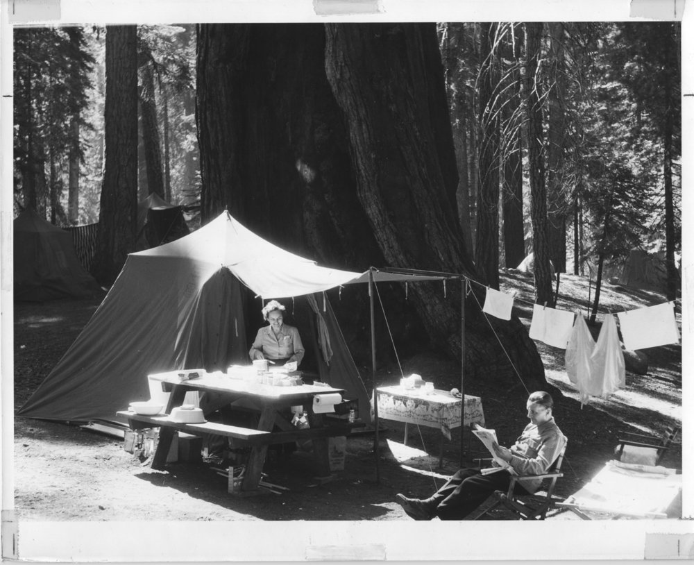 Giant Forest-Sequoia-1930s.jpg